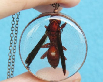 Wasp necklace, real wasp necklace, real bug pendant, real insect necklace, resin wasp, nature lovers gift, resin insect