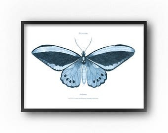 Butterfly Wall Art, Large Wall Art, Printable Art, Digital Download, Butterfly Print, Vintage Butterfly Illustration, Art Prints, Wall Art