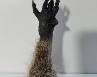Raccoon paw taxidermy novelty oddities gag gift weird art