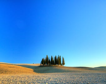 The San Quirico d'Orcia's cypresses - Cypresses - Nature - Countryside - Landscape - Photogrphy art - Photo