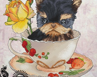 Yorkshire Terrier in a Cup