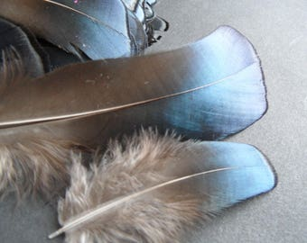 iridescent blue rare feathers, 2, selected for their quality!