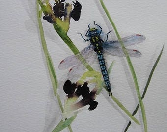 Dragonfly and Snakeshead Iris/Iris and Emperor Dragonfly/watercolour iris and dragonfly