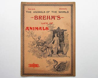 Antique 1896 Brehm's Life of Animals, Part 14-A, Illustrated, 1890's Booklet, Marquis & Company, The Beasts of Prey, The Dog Family, Hound