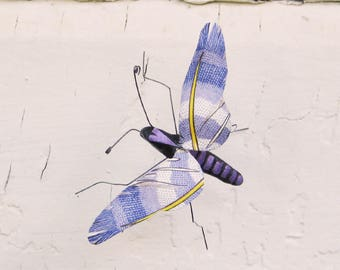 Violet Feather Wing Bug