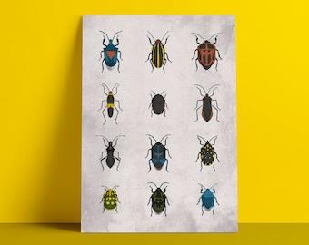 Poster beetles
