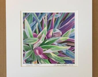 Oyster Plant Matted Art Print