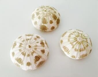 Sea Urchin - sea shell - shell - shell - Sea Urchin - nautical decor