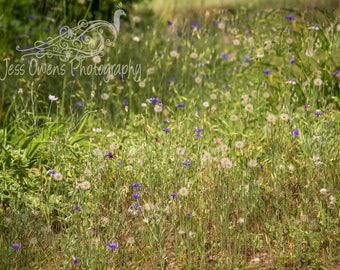 Flower Field Digital Download