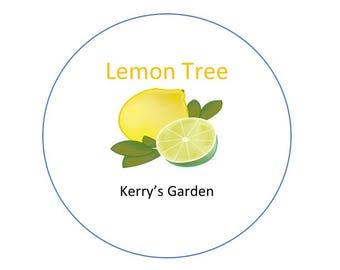 Grow your own Lemon tree gift set