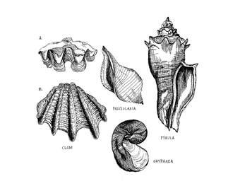 Shell We print