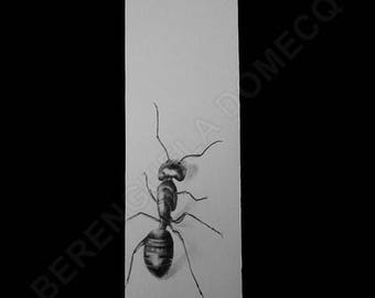 Ant draw handpainted Original Artwork Collectors Entomology lovers Gift