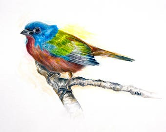 Painted Bunting Original Watercolor Painting High Quality Giclée Print canvas, home decor office nursery animal art Handmade gift art PRINT