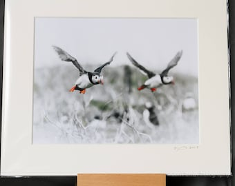 "Puffin Portrait  ""Synchronised Flying"" Photographic Print"