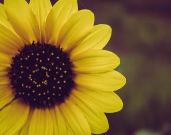 Photograph - Sunflower