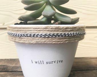 I will survive | pot plant with a pun| funny | succulent | graduation | gift | music lyrics 11cm pot
