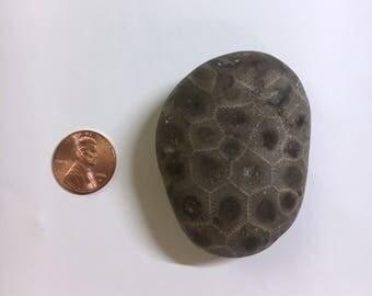 Polished Petoskey Stone - Large