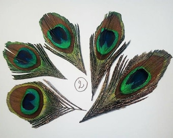 Set of 5 beautiful Peacock eye feathers