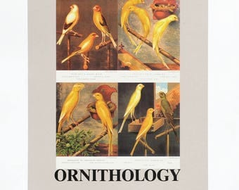 PETER BLAKE - Signed Original Screenprint 'O is for Ornithology', Limited Edition from 1991, Framed