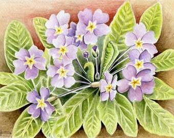 REPRODUCTION of my original watercolor: the magic of spring, Primroses.