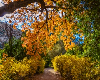 Fall, Autumn, Path, Colorful Nature, Leaves, Nature, Landscape Photography, Digital