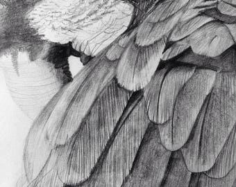 Sketch of parrot. Pencil