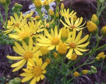 beautiful yellow wildflowers