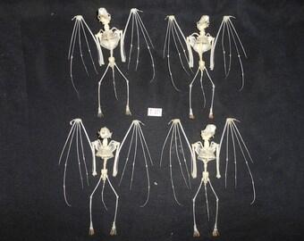 Taxidermy Hipposideros Diadema Skeleton 4 Pcs