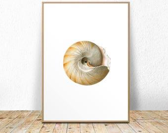 Printable seashell art, seashell art print, seashell printable, seashell wall art, seashell wall decor, 11x14, A3, 8x10, seashell poster