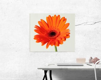 flower on canvas, gerbera daisy on canvas, canvas print, gerbera, daisy, canvas