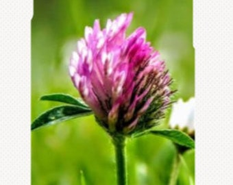 iPhone Case - Purple Flower