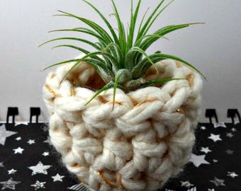 White with Two Gold Stripes Air Plant Pot