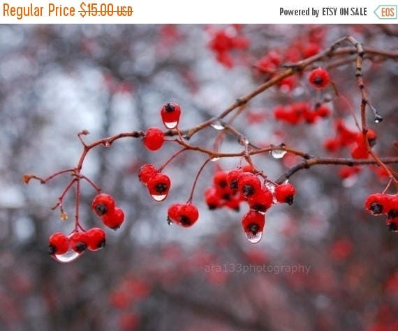 50% OFF SALE Christmas Holiday Decor, Berries, Nature Photography, Winter, Grey, Holiday, Branches, Berries, Woodland  - 5x7 inch Print - Wi
