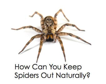 All Natural Spider Repellent ( great to take camping!)