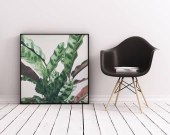 Leaf Art Print, Abstract Botanical Art, Gift for Gardener, Kitchen Wall Art - Pattern