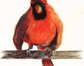 SPECIAL Cardinal 3 red bird // pastel drawing // Texas painting of bird on branch // collectible artist