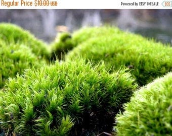 Save25% Terrarium Moss-Frog Moss-Live Moss for Terrariums and Vivariums-Quart Bag