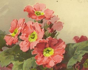 RESERVED LISTING (KS) Pink Cranesbill Botanical Artist Signed Vintage Postcard Catherine Klein Unused Meissner & Buch Publishing