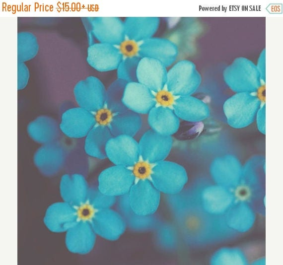 Narue Photography Flower Photo: Forget me not Fine Art Macro Photography blue wall art botanical art prints wall decor Spring Flowers Print