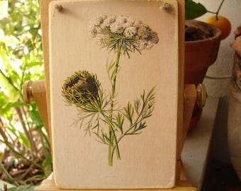 vintage,botanical plate,carrot flower,old style image applied to wood ready to hang, small gardeners gift
