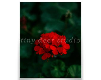 Dark Green and Red Art Print - Boyle Heights LA, Floral, Plants