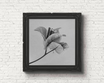 Digital download | FORGOTTEN NO.1 | grey wall art | printable flower photo | minimalist flowers | botanical wall art | modern floral art