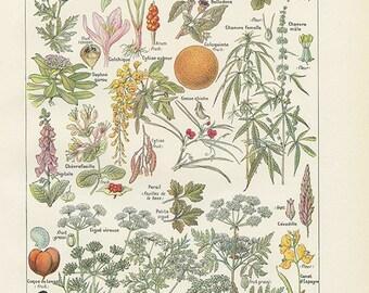 Plantes dangereuses 1962 vintage Petit poster de plantes médicinales vintage Cadeau plantes Décoration herboristerie