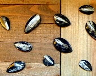 "Orthoceras fossil 2-3"" polished pendant necklace gemstones rocks minerals vintage ocean life jewelry"