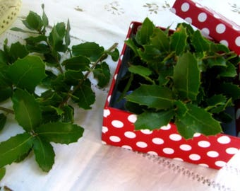 Holly leaves dried, Craft Supply, Magical Tool, Wicca