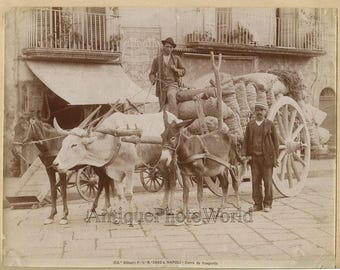 Naples+men+with+loaded+ox+cart+antique+albumen+art+photo+Italy