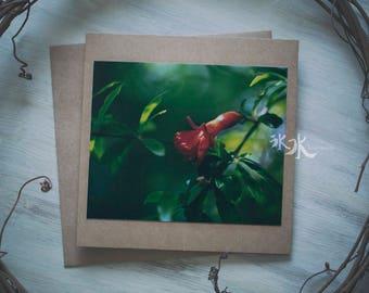 Floral Photo Card - Pomegranate blossom - Punica