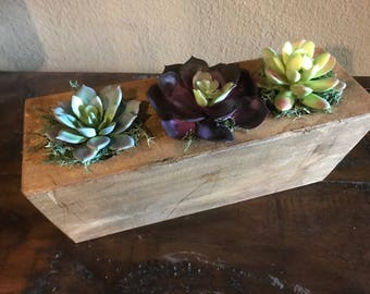 3 Hole Sugar Mold WITH artificial succulents
