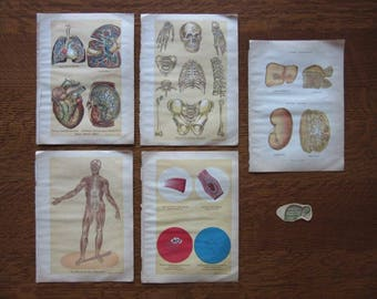 Original Antique Medical Book Pages,Color Illustration,Artwork,Paper Ephemera,Morbid Vintage Art,E.J. Stanley,Human Body,Original Book Pages