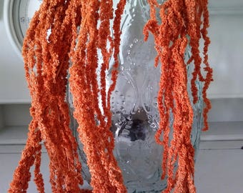 Preserved hanging amaranthus terracotta autumn orange